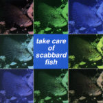Take Care of Scabbard Fish